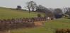 Ovine & Pine (Richie B.) Tags: 6j37 langwathby cumbria colas rail brush traction procor mirrlees settle and carlisle railway