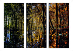 Michigan changes triptych (hz536n/George Thomas) Tags: 2017 cs6 triptych canon5d canon copyright ef1740mmf4lusm upnorth michigan trees reflection seasons wet prescott nik water