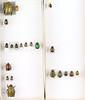 Unidentified Rutelinae box 9 (Biological Museum, Lund University: Entomology) Tags: coleoptera scarabaeidae rutelinae