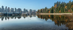 When skyscrapers blending with nature (Howard L.) Tags: britishcolumbia canada canonef1635mmf4lisusm reflection sonya7rii stanleypark vancouver whydoyoutakepictures crazytuesdaytheme 7dwf sailing port water nature blending trees autumn architectures ships ducks skyscrapers