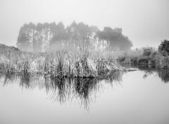 Shallow Landscape (ajecaldwell11) Tags: sunrise ankh water xe2 fujifilm light trees hawkesbay newzealand blackandwhite pekapekaswamp boardwalk wetlands reflection sky fog mist caldwell dawn clouds