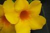 Lovely (Rajavelu1) Tags: flowers macrophotography canon60d canonef100mmf28lisusmmacro dslr colours art creative artdigital