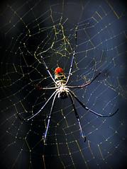 Arachnophobes s'abstenir (Raymonde Contensous) Tags: pzp parczoologiquedeparis zoodevincennes grandeserrepzp animaux nature araignées