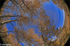 What a ride (dwight g) Tags: canon 6d 815 fisheye trees sky ps topaz