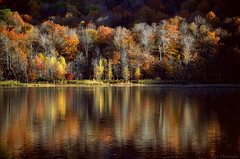 As the season fades (Captions by Nica... (Fieger Photography)) Tags: trees tree branches forest fall mountain autumn nature reflections reflection outdoor water landscape lake shoreline quebec canada serene