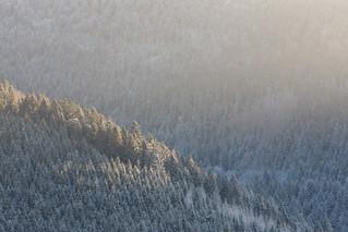 Un matin dans les Vosges
