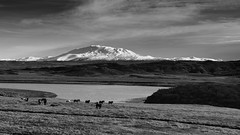 Iceland in a nutshell for you (lunaryuna) Tags: iceland autumn season fall herbst otono landscape panoramicviews mountain snowcappedmountain icelandichorses river wilderness sunlight longlight goldenhour lunaryuna monochrome blackwhite volcano mthekla