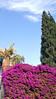 Claudia's Photography (claudia.joseph16) Tags: bougainvilleas pink purple trees sky