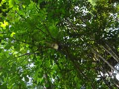 DSC09585-berge (194) (ventripat) Tags: kaffee indien kumily berge kräuter pflanzen gewürze spice garten