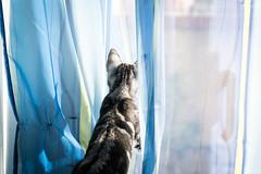 The Watch (DanAie) Tags: photography pentax pisa photographer composition color colour colors composizione contrast blue cat animal artistic
