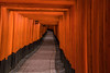 First impression (21mapple) Tags: inari shrine tori gate japan japanese kyoto torii