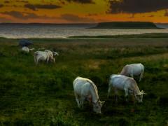Bolund after sunset (ibjfoto) Tags: bolund cove danmark denmark ibjensen ibjfoto nationalparkskjoldungernesland natur roskilde roskildefjord skjoldungelandet sunset vig outdoor water