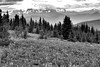 Heather Trail View 5 (gerry.bates) Tags: ecmanningprovincialpark nature landscape mountains cascademountainrange meadow wildflowers flowers britishcolumbia canada canon summer hiking trails flora trees slopes alpine blackwhite