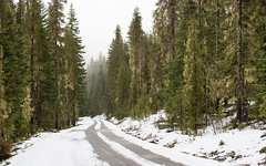 Road To Winter (John Westrock) Tags: trees road winter snow nature overcast cloudy washingtonstate pacificnorthwest canoneos5dmarkiii canonef2470mmf28lusm