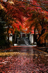 Early winter in Japan (kat-taka) Tags: ã¬ãã autumn winter shrine temple japanese japan red beautiful fantastic traditional travel snow