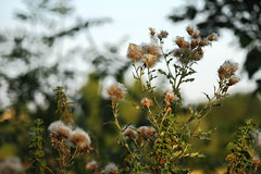 Beautiful Montgeron France (maosor99) Tags: montgeron france francia europe europa nature naturaleza green verde sky flor flower flowers canon canon7d 7d paisaje landscape