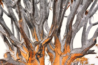 Quiver Tree Branches