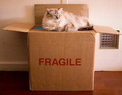 Fragile (Loanne Lo ou Lolo) Tags: carton fragile