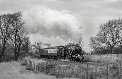 """""""The Bleak Forester"""" Black 5 45231 'The Sherwood Forester' (Liam60009) Tags: black5 45231 thesherwoodforester sherwoodforester blackfive whalley wilpshirebank wilpshire whalleybank locomotive steam steamlocomotive steamtrain steaming autumn monochrome blackandwhite bw sony sonya7rii a7rii"""