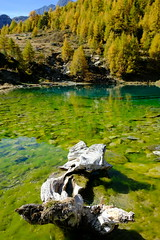 DSCF1974 (Lakuda-san) Tags: lac valais lacbleu arolla switzerland wallis