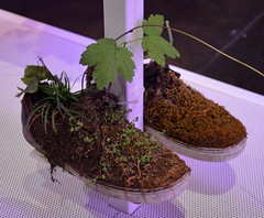 """Collection De Chaussures"" by Michel Blazy [Venice - 29 July 2017] (Doc. Ing.) Tags: 2017 venice veneto italy nordest 56thartbiennale 56thbiennale 56thvenicebiennale vivaarteviva arsenal ve collectiondechaussures michelblazy mixedmedia shoes plants soil water verticalgarden garden installation"