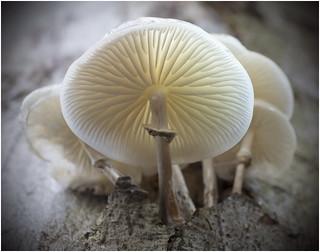 the happy tree fungi colony