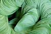 17105346 (felipe bosolito) Tags: leaves green india delhi market fuji xpro2 xf1655 velvia