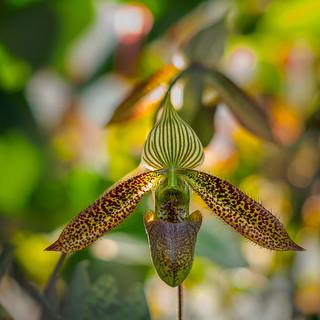 Orchidee_Berggarten2 (1 von 1)