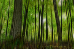 The Green Loss (HSS) (13skies) Tags: effect photoshop woods blurred effects green elements layermask play bambootablet trails daytime cover trees forest leaves processing postprocessing countryside countryroad conservation sony slidersunday happyslidersunday slider sonya57