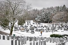 First Snow (Adam Curran) Tags: saintjohn saint john newbrunswick new brunswick snow graveyard cemetary fernhill person dog gravestone tree outdoors winter