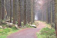 HARZER HEXENSTIEG - GLASHÜTTENWEG (Mykel L.) Tags: europe europa deutschland germany alemania sachsenanhalt saxonyanhalt harz nationalparkharz schierke glashüttenweg harzerhexenstieg hexenstieg trail toptrail wandern wanderung hike hiking path weg wanderweg bäume trees fichten forest woods wald oberharz mittelgebirge mountains harzwitchestrail