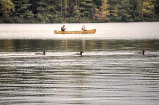 Loons at Fish Creek Ponds 09