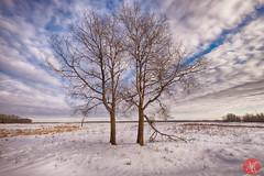 When winter comes.. 4 (Kasia Sokulska (KasiaBasic)) Tags: fujix canada alberta elkisland nationalpark winter snow evening sky clouds landscape trees prairies