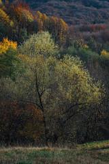Tree two (Ivan Vranić hvranic) Tags: tree trees light autumn sunset croatia braslovje