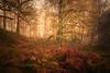 Loch ard woods (jasonhudson2) Tags: ard loch scotland trees mist landscape sony bracken autumn