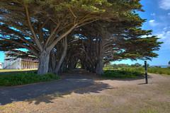 Point Nepean National Park (Daniel J. Mueller) Tags: mointnepean mornington peninsula victoria australia quarantine station trees alley path hdr