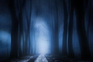 cold avenue