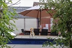 Chien de plaisance (chando*) Tags: barge bateau boat chien dog parasol péniche ronquières