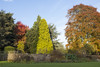 Coombe Abbey, Warwickshire (new folder) Tags: coombepark coombeabbey warwickshire autumn tree