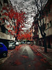 Autumn (@Dpalichorov) Tags: road tree building car cars autumn leafs red redleaf nature nikond3200 nikon d3200 bulgaria varna българия варна street fall falling leafpad asphalt pavement samsung galaxy s8 samsunggalaxys8