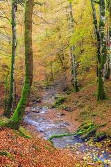 Bosque de Eugi !!! (T. Dosuna) Tags: tdosuna d7100 paisaje navarra spain españa bosques eugi landscape paisajesdeespaña nikon