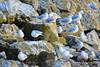 A-LUR_2246 (OrNeSsInA) Tags: trasimeno uccelli bird natura italia umbria castiglionedellago ornessina lucarosi nikon tamron byrd lago chiusi siena perugia aironi cormorani