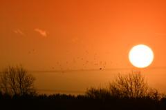 Sunrise over Stow Longa (UK) (JerryGoulet) Tags: