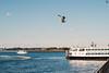 Seagull fly by (FOXTROT ROMEO) Tags: seagull gull libertyisland ny nyc usa liberty bird fly by