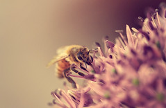 Exploring a new planet (akigabo) Tags: montreal flora fauna blur dof sunset golden pink eos canon t5i 100mm canada light life akigabo
