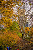 1339_0560FLOP (davidben33) Tags: newyork central park street streetphotos people nature trees bushes leaves colors green yellow sky cloud lake portraits women girl cityscape landscape autumn fall 2017 beaut