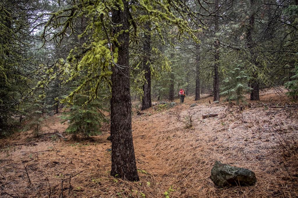 Oregon trail research paper