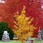 "Cincinnati – Spring Grove Cemetery & Arboretum ""Yellow On Red"" thumbnail"