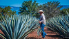2017 - Mexico - Tequila - Blue Agave Plants (Ted's photos - For Me & You) Tags: 2017 cropped mexico nikon nikond750 nikonfx tedmcgrath tedsphotos tedsphotosmexico tequila vignetting jimador tequilajalisco tequilatour santiagodetequila blueagave agave plants denim denimjeans people peopleandpaths