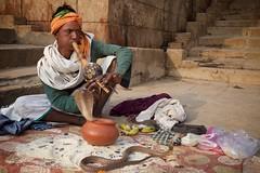 Snake Charmer (Bradbury Lense) Tags: arts assighat charmer cobra flute india music performance snake varanasi